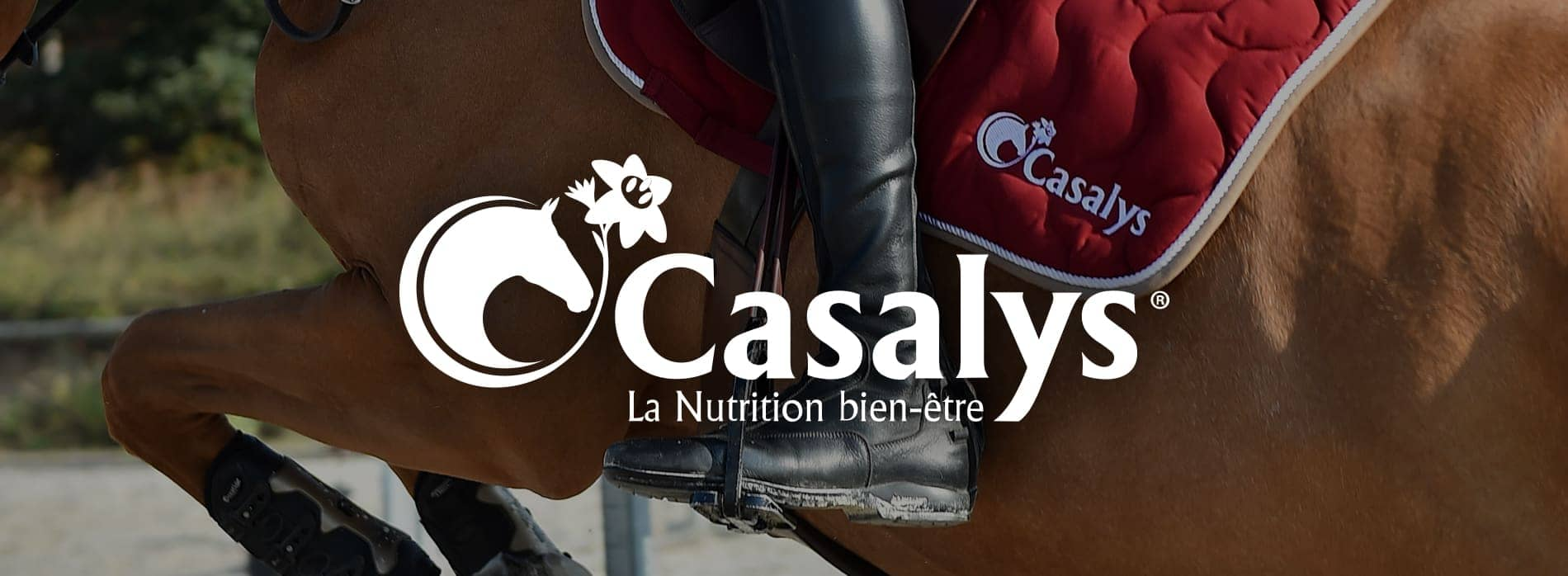 Bandeau Casalys